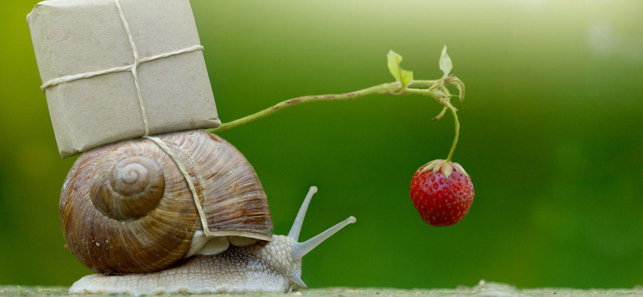 Titelbild-Schnecke-Erdbeere-langsam-rennen-iStock-610224946